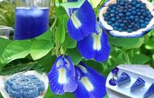 Thứ hoa rụng đầy bờ rào giờ được tiểu thương chợ mạng bán giá gần nửa triệu đồng/kg