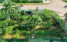 """""""Nông trại"""" rộng 300m² đẹp như cổ tích với đủ loại hoa và rau quả của mẹ 4 con ở Móng Cái, Quảng Ninh"""