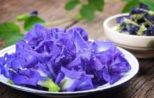 Hoa đậu biếc rất tốt cho sức khỏe nhưng có những người càng dùng càng độc, đặc biệt là 5 đối tượng này