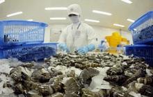 VASEP: Không có ca nhiễm COVID-19 nào tại các nhà máy chế biến tôm, cá tra ĐBSCL