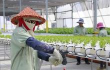 Nikkei Asia: Doanh nghiệp nông nghiệp công nghệ cao Israel đẩy mạnh việc mở rộng đầu tư tại Việt Nam