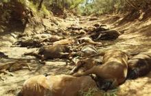 Chùm ảnh nắng nóng hãi hùng trên khắp thế giới: Tan chảy cả nhựa đường, ngựa chết cả đàn như bị thảm sát gây khiếp đảm