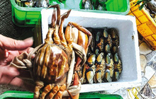 Cua biển Kiên Giang, sầu riêng Đắk Lắk lại rớt giá