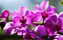 12 loại hoa may mắn được giới nhà giàu ưa chuộng: Vừa làm đẹp ngôi nhà vừa thu hút tài lộc, giá cả lại không quá đắt đỏ thì tội gì không trồng ngay