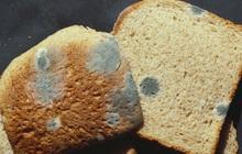Túi bánh mì vừa mua về đã có một lát bị nấm mốc, bạn sẽ làm gì?