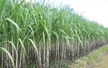 Một lãnh đạo của TTC Sugar vừa bán hơn 4 triệu cổ phiếu SBT