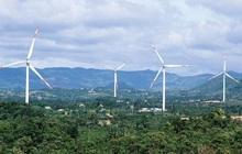 Hoàn thành vận hành dự án điện gió 1.600 tỷ đồng ở Ninh Thuận