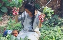 Cô gái trẻ bỏ phố về quê, sống những ngày an yên trong nhà thuê cùng khu vườn đủ loại rau trái