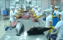Xuất khẩu cá ngừ sang các thị trường chính đồng loạt giảm sâu