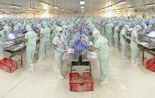 Thủy sản Cửu Long An Giang (ACL) đăng ký niêm yết bổ sung hơn 27 triệu cổ phiếu, tăng vốn điều lệ lên trên 500 tỷ đồng