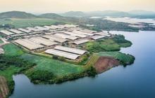 'Hậu trường' quy trình ở cụm trang trại bò sữa lớn nhất thế giới (Kỳ 1)