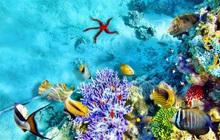 Biệt thự Coral và cảm hứng từ những rạn san hô Hawaii tuyệt mỹ