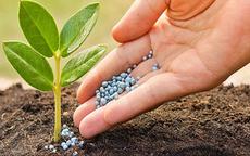 KQKD ngành phân bón quý 1: Giá phân bón tăng cao giúp các doanh nghiệp lãi lớn