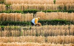 Giá lương thực tăng cao nhất 10 năm khiến người dùng, doanh nghiệp châu Á điêu đứng