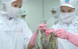 Mỹ giảm thuế chống bán phá tôm nhập khẩu từ Việt Nam