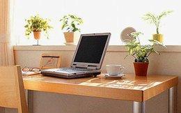 Đặt cây xanh trong phòng làm việc thế nào cho thêm vượng khí?