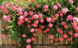 Ngành dệt may thời hội nhập: Con đường có trải hoa hồng?