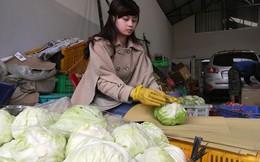 Chóng mặt với giá rau, củ Đà Lạt