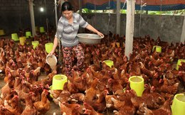 Bộ trưởng Cao Đức Phát: Lo ngại nhất chăn nuôi khi tham gia TPP