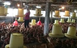 Bộ trưởng Cao Đức Phát: Phải làm rõ nguồn gốc thịt gà nhập