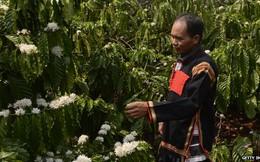 Cà phê Việt Nam: 30 năm và giấc mơ chiếm lĩnh thị trường thế giới