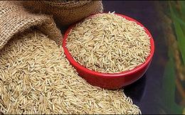 CTCP Nông nghiệp và Thực phẩm Hà Nội – Kinh Bắc trở thành công ty đại chúng