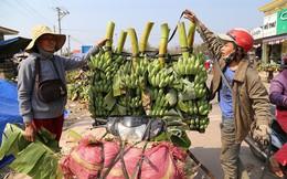 """Quảng Trị: """"Thuế"""" nặng được gỡ, tiểu thương tiếp tục thu mua chuối cho nông dân"""