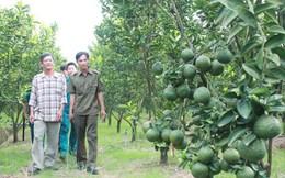 Trồng cây gì, nuôi con gì: Nông dân tự quyết định