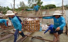 Giải pháp để ngành cá tra phát triển bền vững