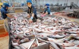 Mỹ giám sát cá da trơn không làm gián đoạn xuất khẩu của Việt Nam
