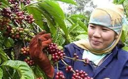 Giá cà phê xuất khẩu giảm trước niên vụ mới