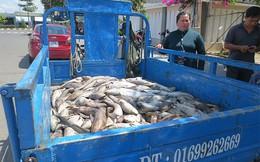 Cá bè chết hàng loạt, nguyên nhân doanh nghiệp xả thải chiếm 76%