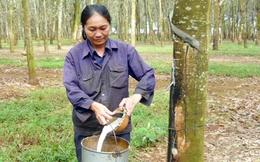 Cao su Tây Ninh (TRC): 6 tháng doanh thu và lợi nhuận giảm sâu