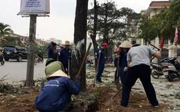 Vụ chặt cây xanh Hà Nội: Đề nghị cách chức, giáng chức 3 cán bộ