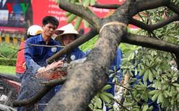 Hà Nội đình chỉ, kiểm điểm hàng loạt cán bộ liên quan vụ chặt cây xanh