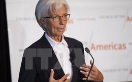 """Giám đốc IMF: Kinh tế thế giới 2016 sẽ """"khá thất vọng"""""""