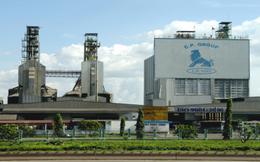 Các công ty FDI điều khiển thị trường thức ăn chăn nuôi Việt Nam