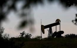 Giá dầu vẫn sụt mạnh