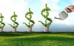 """[Doanh nghiệp 1/4]: Sau kiểm toán lợi nhuận lại """"bốc hơi"""", SBT, STB mở rộng đầu tư ra nước ngoài"""