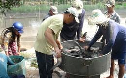 Thị trường Campuchia hút tôm, cá Việt Nam