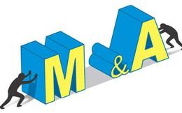 Doanh nghiệp nhỏ trên thị trường M&A: Sức hút mới với DN nội