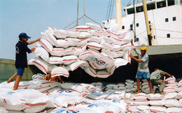 Giá gạo xuất khẩu giảm, áp lực cạnh tranh tăng