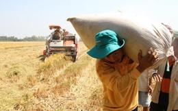 Thu nhập bình quân ở nông thôn:24,4 triệu đồng/người/năm