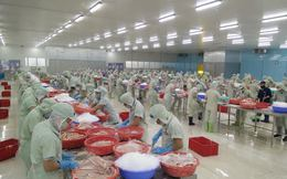 Hai nhà máy chế biến cá tra của Hùng Vương lớn cỡ nào?