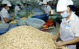 Lần đầu tiên Việt Nam xuất khẩu điều đạt 2 tỷ USD