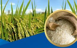 Việt Nam tận dụng cơ hội xuất khẩu gạo nhờ hiện tượng El Nino