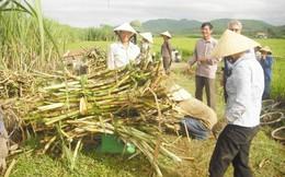 Hiệp hội Mía đường Việt Nam không phản đối đề xuất nhập 50.000 tấn đường