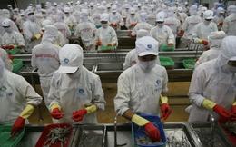 Trước khi rời sàn, Thủy sản Minh Phú kịp báo lãi khủng 755 tỷ đồng năm 2014