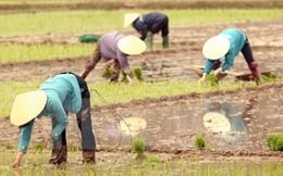 Canada hỗ trợ Việt Nam 13 triệu USD phát triển nông nghiệp