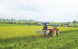 Quá ít doanh nghiệp tham gia kinh doanh nông nghiệp